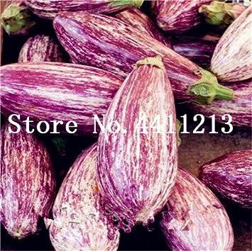 Nouveaux Kalash 100 Pcs Aubergine végétales SEEDS pour le ...