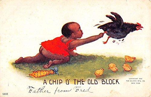 Black Americana Child Grabbing Chicken Chip O Old Block Antique Postcard K71964 Vintage Black Americana