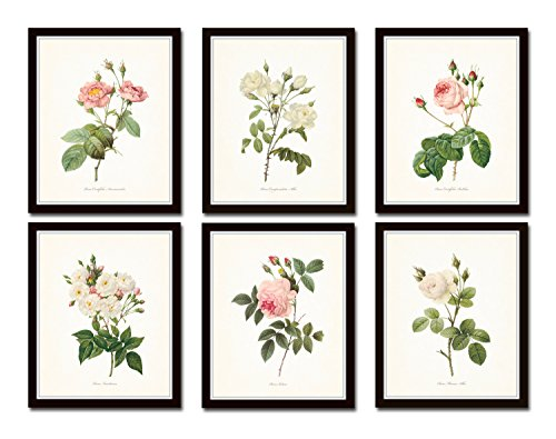 Antique Redoute Roses Botanical Print Set No.5 Set of 6 Giclee Fine Art Botanical Prints - Unframed