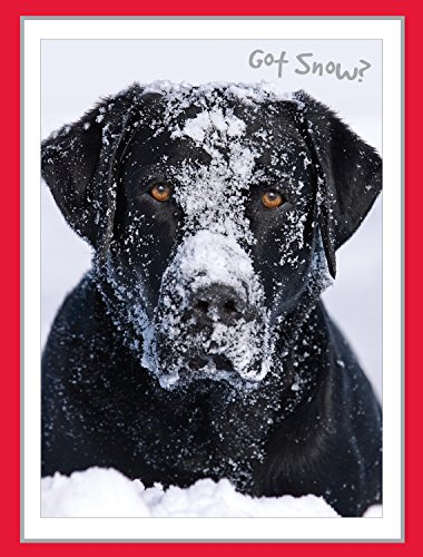 Rocky's Snowball Fight - Black Lab Christmas Cards