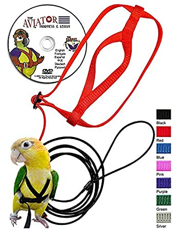 Amazon Com The Aviator Pet Bird Harness And Leash Petite Black