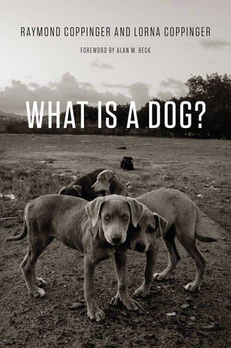 What Is a Dog? pdf epub