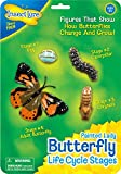 Butterfly Life Cycle Stages offers