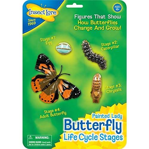 Insect Lore 48122 - Étapes du Cycle de vie-papillon
