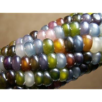 Glass Gem Corn - Rare Heirloom Variety (100+ Seeds) by PowerGrow (USA Grown) : Garden & Outdoor