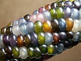 Glass Gem Corn - Rare Heirloom Variety (50 seeds) by PowerGrow (USA Grown)