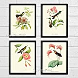 Hummingbirds Botanical Print Set of 4 Art Antique Beautiful Tripical Birds Flowers Plants Illustration Home Room Decor Wall Art Unframed