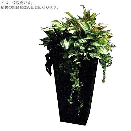 人工観葉植物 アーティフィシャルグリーンアレンジ 鉢付き 幅65cm rg-006 B074FXW13J