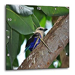 3dRose Dreamscapes by Leslie - Birds - Blue Bellied Roller Bird - 15x15 Wall Clock (DPP_314227_3)