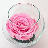 Luxe Bloom Single Lasting Luxury Rose - Rosa