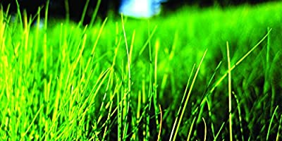 Fine Fescue Grass Seed Blend