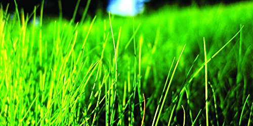 Nature's Seed TURF-FF-2000-F Fine Fescue Grass Seeds Blend, 2000 sq. ft, Medium Green