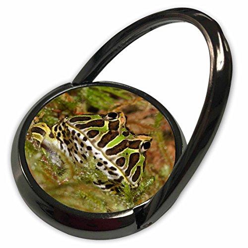 3dRose Danita Delimont - Frogs - Pacman frog, South American Horned frog - NA02 AJE0361 - Adam Jones - Phone Ring (phr_83642_1)