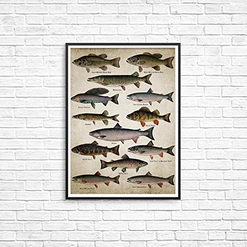HHXX9 Fishing Wall Art Canvas Posters/Prints Breeds of Fish Painting/Freshwater Fish Wall Picture/Home Room Decoration-50X70Cm No Frame