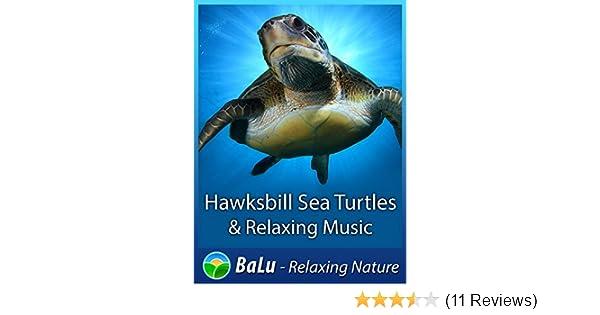 Amazon com: Hawksbill Sea Turtles & Relaxing Music - BaLu
