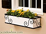 48 Inch the Scroll Window Box Cage (Square Design)