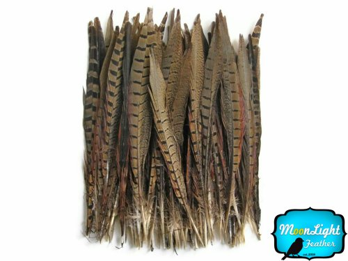 Ringneck Tail - Ringneck Pheasant Tail Feathers, 6-8 Inches