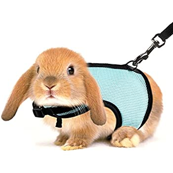 how to leash train a rabbit