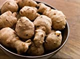 1 LB Jerusalem Artichoke Sunchoke by the Pound - Organic - AKA Sunchokes, Sunroot or Jerusalem Artichokes (1 LB)