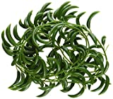 Zilla 09622 72-Inch Terrarium Vines Plant, String of Bananas
