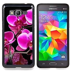 "Qstar Arte & diseño plástico duro Fundas Cover Cubre Hard Case Cover para Samsung Galaxy Grand Prime G530H / DS (Purple Lily Flores"")"