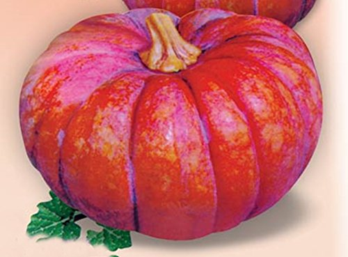 Rare Pumpkin Seeds - 3