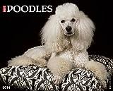 Just Poodles 2014 Wall Calendar