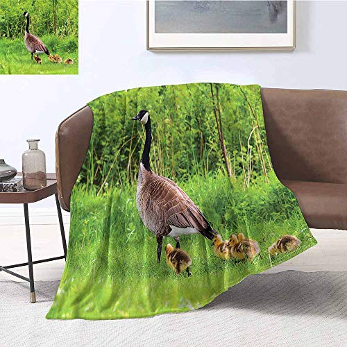 Canadian Geese Blanket - DILITECK Living Room/Bedroom Warm Blanket Geese Canadian Chicks on The Grass Fall Winter Spring Living Room W60 xL91 Traveling,Hiking,Camping,Full Queen,TV,Cabin