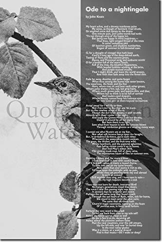 Introspective Chameleon (B&W) John Keats Poem Print - Ode to a Nightingale - Art Photo Poster Gift - Size: 24 X 16 Inches (38 x 25 cm)