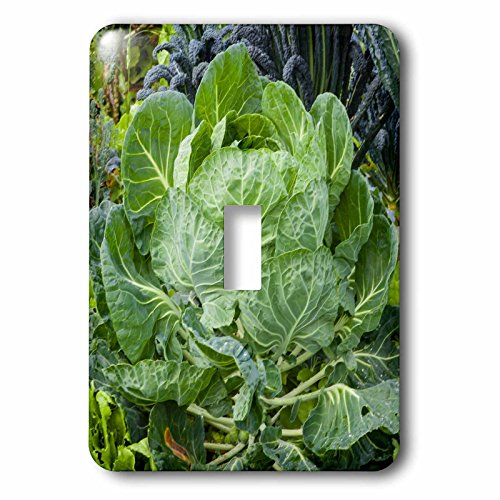 3dRose Danita Delimont - food - Cabbage in a neighborhood garden - Light Switch Covers - single toggle switch - Outlets Mcallen
