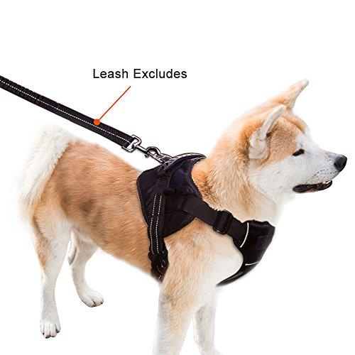 Sports Dog's Harness Set (Black) - 1