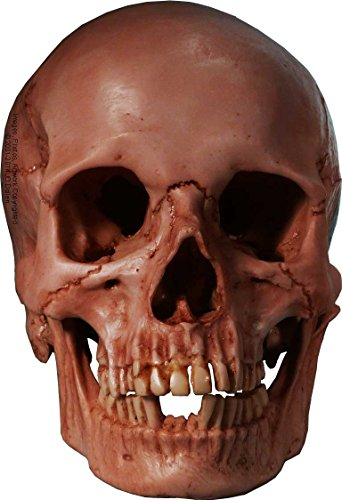 human-skull-replica-aged-relic-antique-blood-stained-bloody-red-life-size-reproduction-by-nose-desse