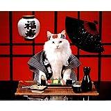 Sushi Cat (Japanese) Photo Print Poster Mini Poster Mini Poster Print, 20x16
