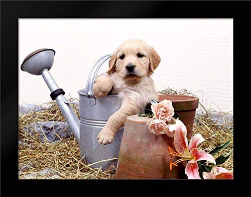 Puppies in Watering can Framed Art Print by Hoenderkamp, Patrick