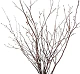 Tin Roof Treasure Natural New England Birch Branches 12