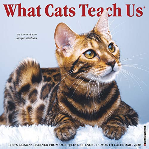 - What Cats Teach Us 2020 Wall Calendar