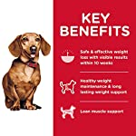 Hills-Science-Diet-Dry-Dog-Food-Adult-Perfect-Weight-for-Healthy-Weight-Weight-Management-Small-Mini-Chicken-Recipe-15-lb-Bag