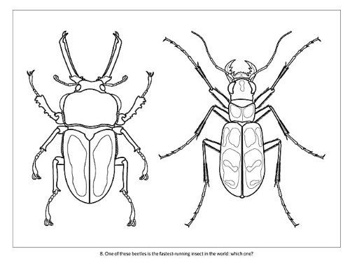 Incredible Insects: Designs by Christopher Marley Coloring Book ...