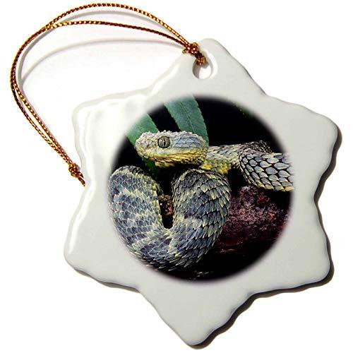 3dRose African Bush Viper Snake Snowflake Ornament 3