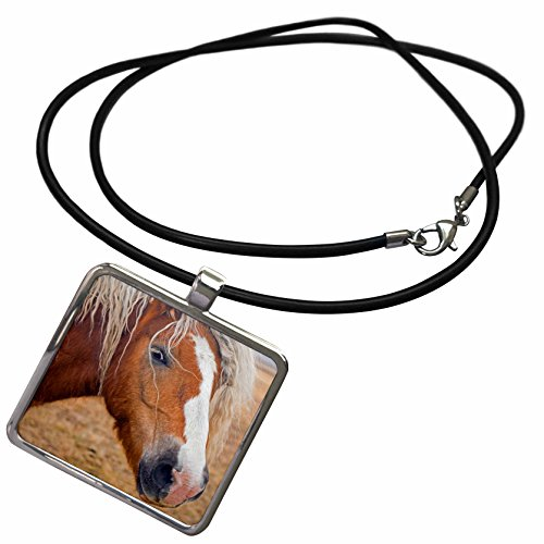 3dRose Bob Kane Photography Animals - Blond Horse