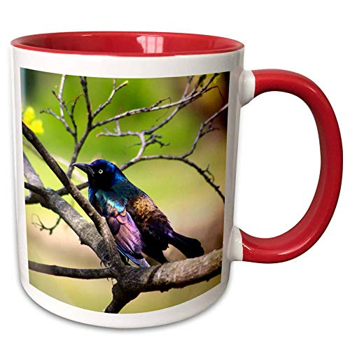 3dRose Stamp City - birds - Photograph of a colorful Common Grackle sitting among the branches. - 15oz Two-Tone Red Mug (mug_291284_10)
