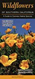 Wildflowers of Southern California, Quick Reference Publishing, 1936913801
