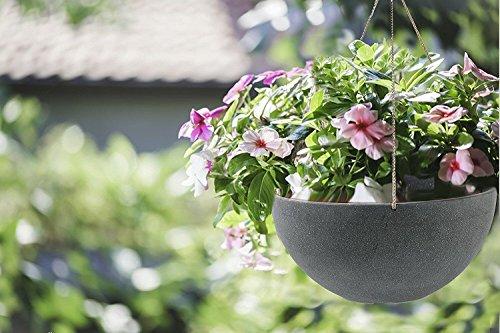 Buy hanging planters