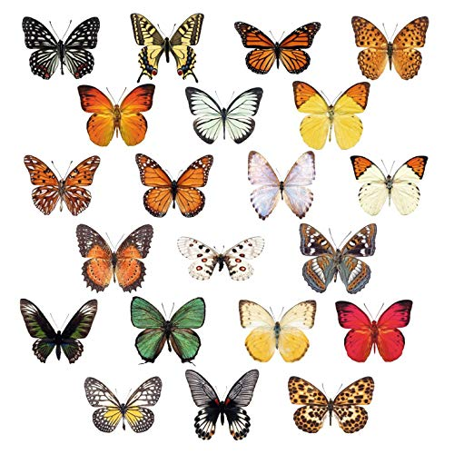 Window Flakes - 21 Beautiful Photorealistic Colorful Butterfly Window Clings - Non-Adhesive - Helping Prevent Bird Strikes on Windows.