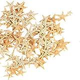 Ogrmar Small Starfish Star Sea Shell Beach Craft
