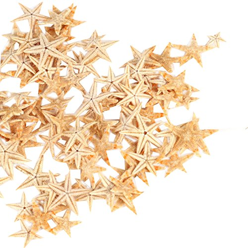 (Ogrmar Small Starfish Star Sea Shell Beach Craft 0.4