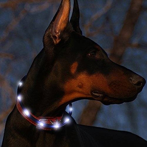 Led Dog Collar USB Rechargeable Glowing Pet Safety Collars Water Resistant Light up Improved Dog Visibility & Safety Adjustable Flashing Collar for Dogs 6 Stylish Colors by Bseen (Black)