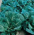 David's Garden Seeds Collards Flash D2116COLL (Green) 200 Hybrid Seeds