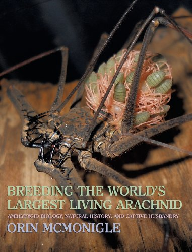 Bug Assassin (Breeding the World's Largest Living Arachnid: Amblypygid (Whipspider) Biology, Natural History, and Captive Husbandry)