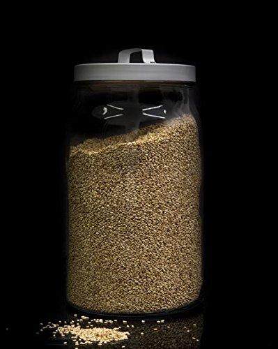 Lino dorado semillas a granel - 1000 grs: Amazon.es: Alimentación ...